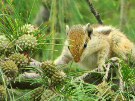 Cute Squirrel in action