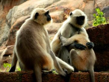 A happy monkey family