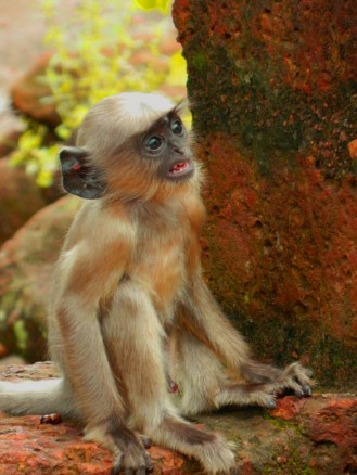 A monkey kid